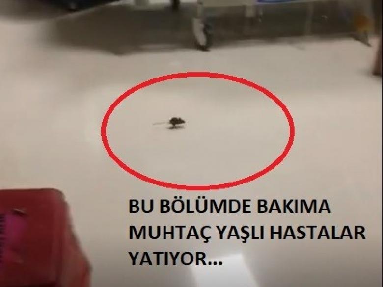 FARELİ DEVLET HASTANESİ